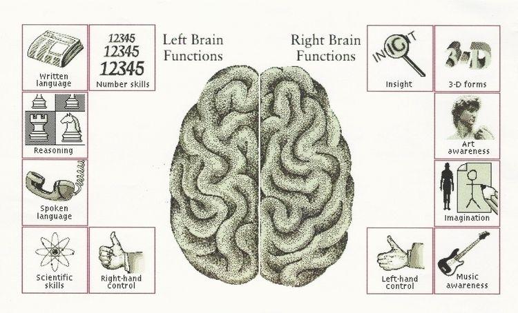 Career Exploration XII Brain Le - ccruzme   ello