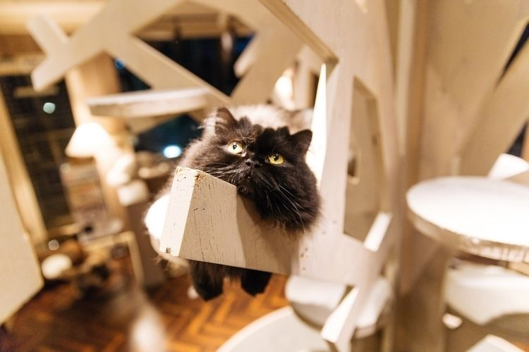 Cat photography cat cafe mocha  - terence223 | ello