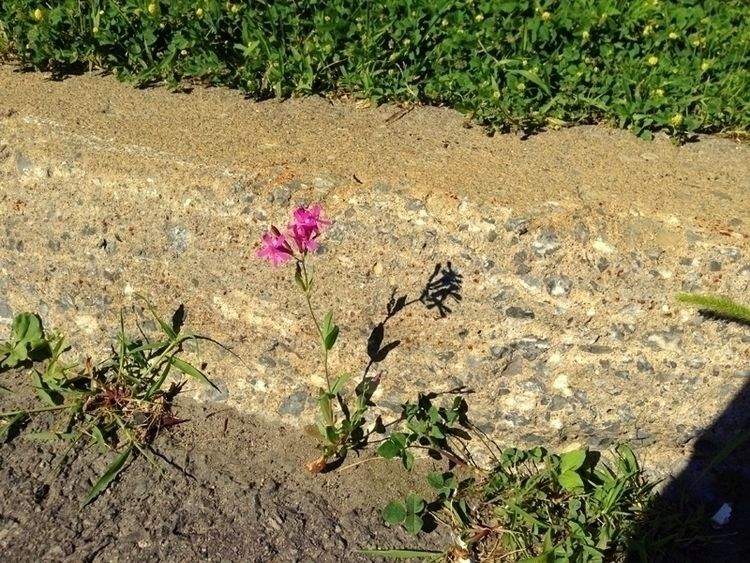 Curb Flower - photo, street, nature - dispel | ello