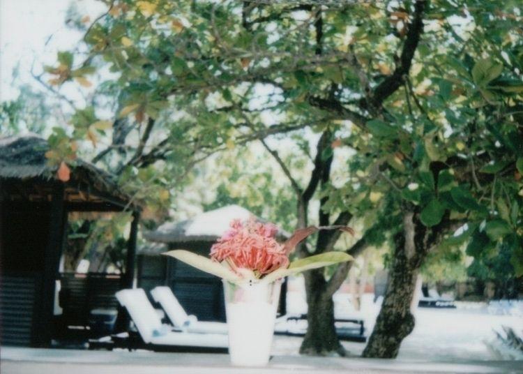 fujifilm, instax, 60mm, instant - girl-scout | ello