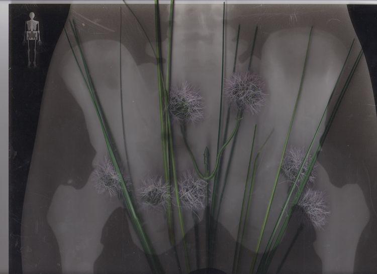 Bloomers - artphotography#fineartphotography - phobic_mango   ello