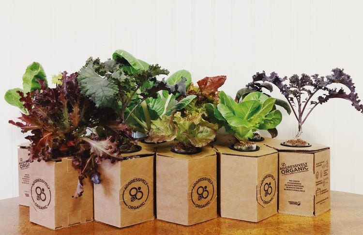 Apartment Dwellers - Gardening - feliciaalfordid | ello