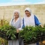 cannabis seeds easy grow? Seeds - sensibleseeds | ello