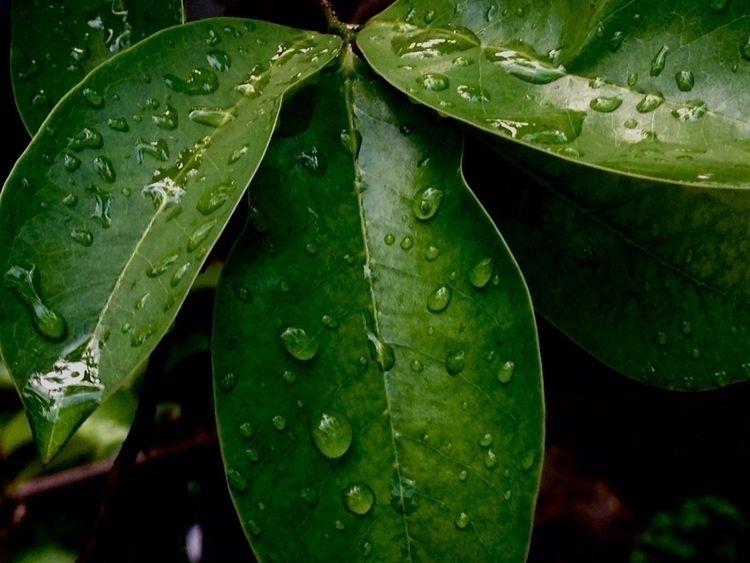 Rainy afternoon - phonephotography - mikoyzkee | ello