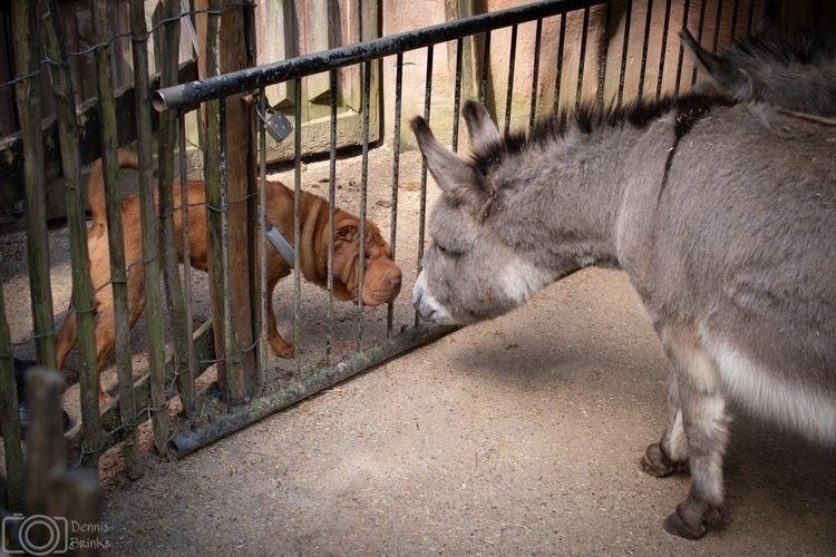 friend:heart_eyes - Donkey, Ezel - jordan23 | ello