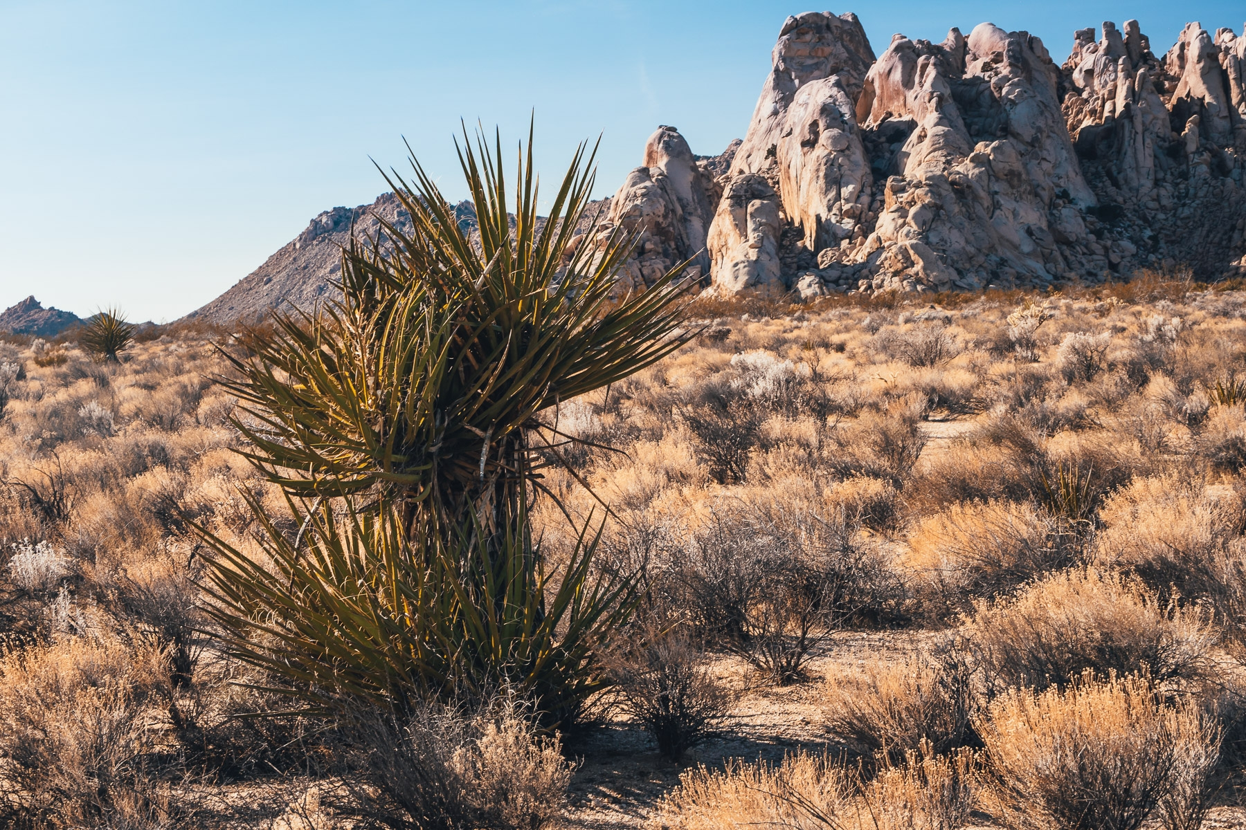 Yucca Rocks yucca tree grows ro - mattgharvey | ello