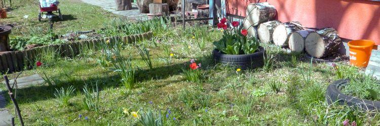 Unsere Wildblumenwiese Nach lan - montessori_chemnitz | ello