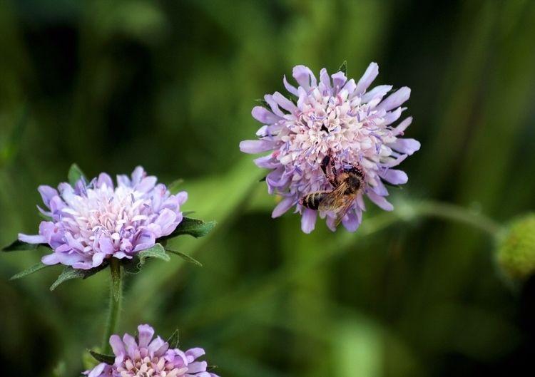 Bee flower~Ż - pandawszyszkach | ello