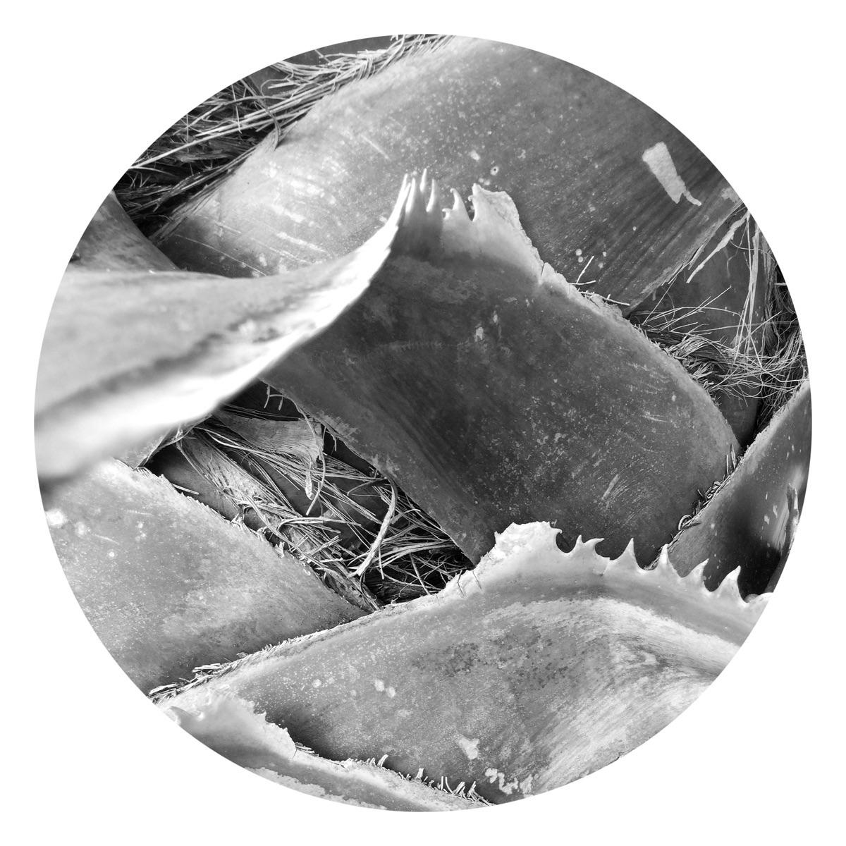 Palm Tree Teeth Apps - mikefl99 - mikefl99 | ello