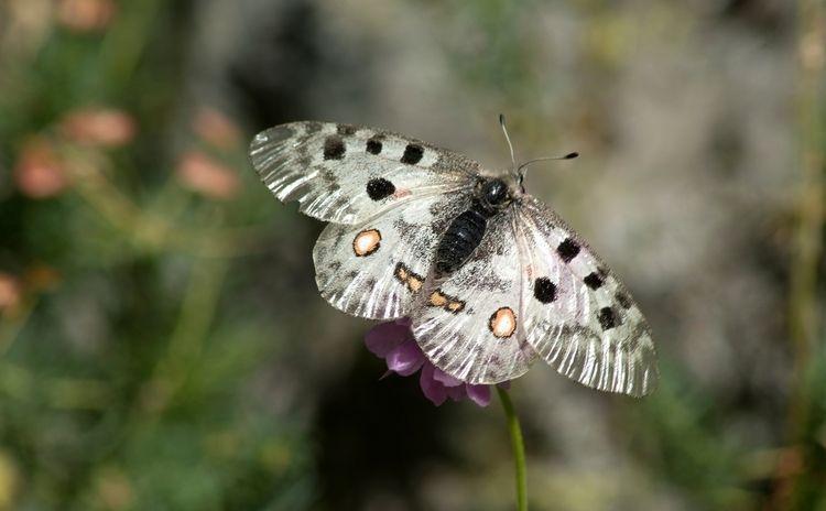 Quelques papillons, cet été der - gclavet | ello