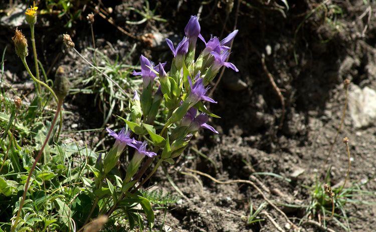 En bouquet, dans la nature... h - gclavet | ello