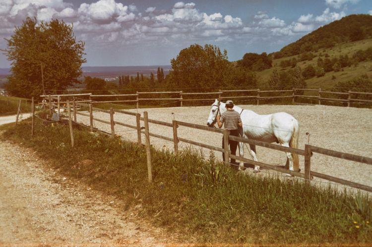 white horse - photography, filtered - marcushammerschmitt | ello