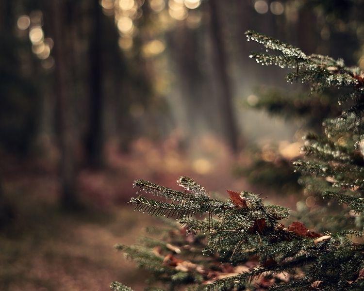 forest - felixbaio | ello