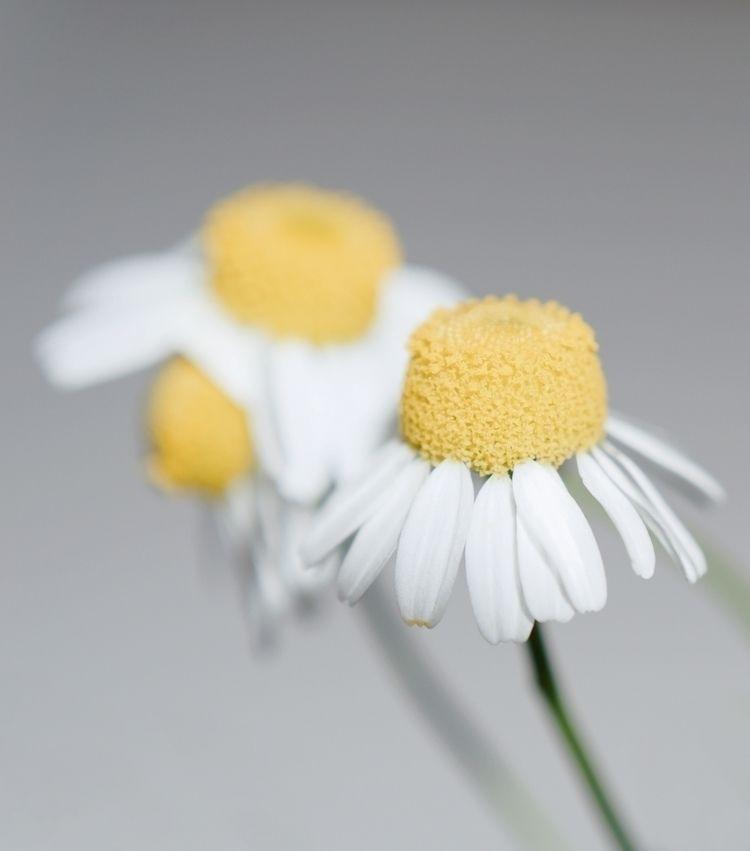 Modernists - photography, flowers - marcushammerschmitt | ello
