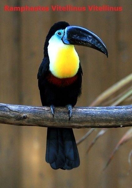 Rainbow Toucan suns land Exan T - pasitheaanimalibera | ello