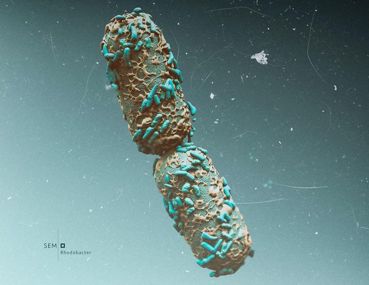 SEM NastPlas scanning electron  - nastplas | ello