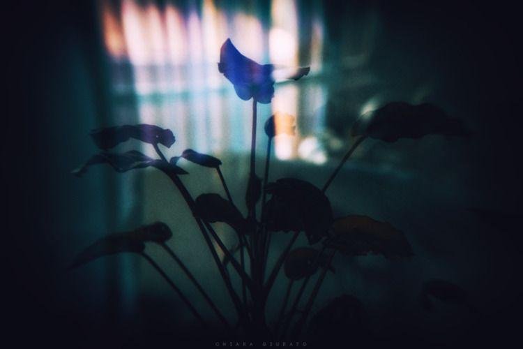 Chiara Giurato Underwater - chiaragiurato | ello