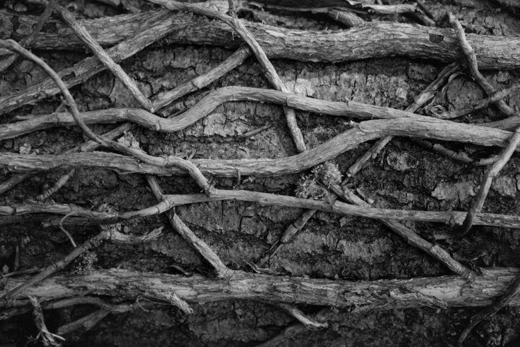 Transport - photography, wood, monochrome - marcushammerschmitt | ello