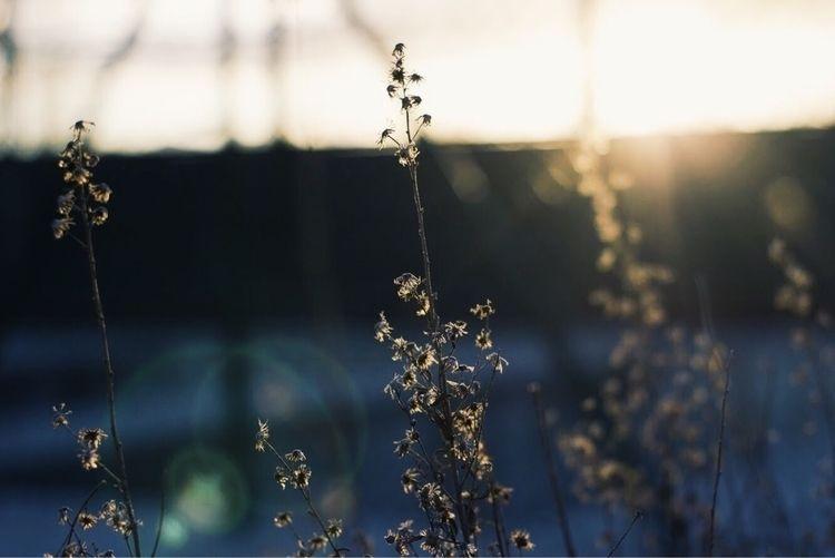 Efímero - sunshine, time - adisc | ello