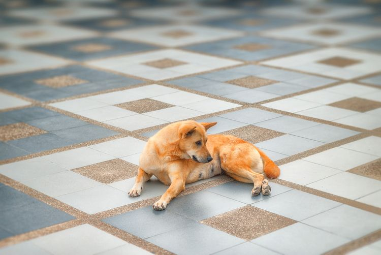 temple dog mountain Wat Phra Do - christofkessemeier | ello