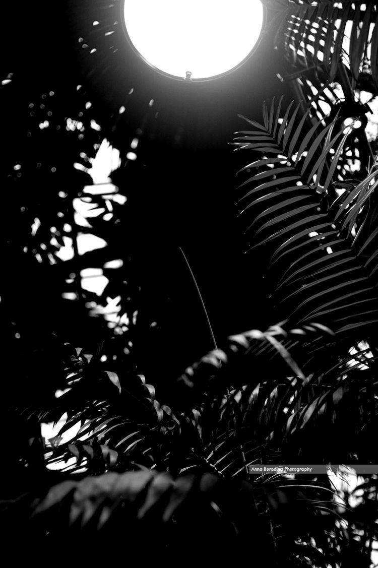 untitled botanical - nannile | ello