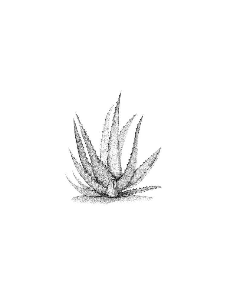 Aloe feeling - aloe, organic, nature - xovict | ello