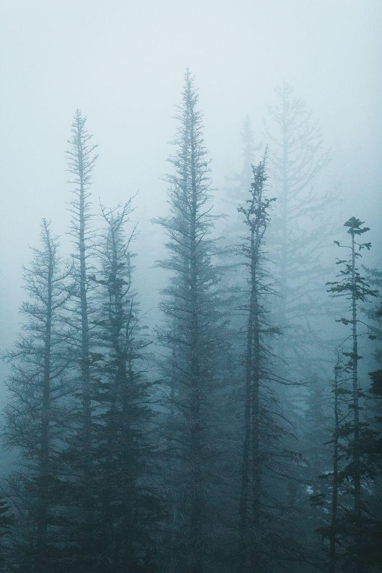 Twilight Pines  - Colorado, photography - josiah_weaver | ello