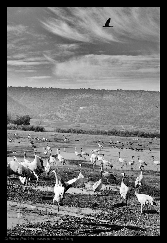 MIGRATIONS Birds free migrate.  - pierrep-fifoblog | ello