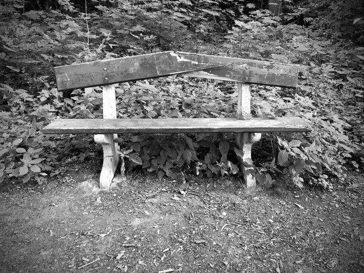 live big forest. comforting Eur - sarn | ello