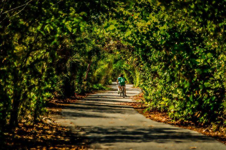walking path canopy brush side - rickschwartz   ello