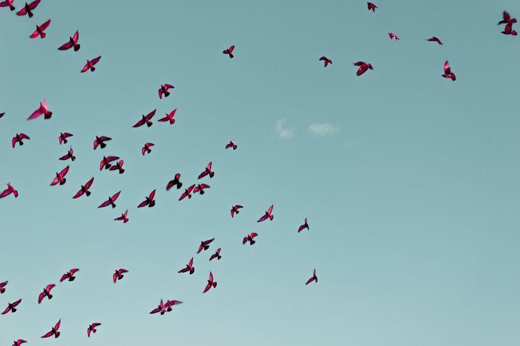 Minimalism Collection - birds, bluesky - bmontavon | ello