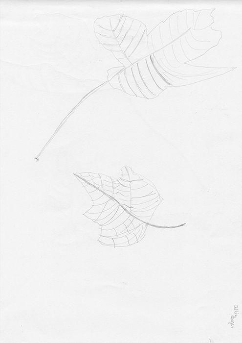 Júlia Borges, 2017/18 Desenho d - exploracaografica | ello