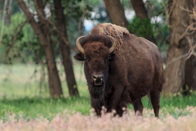 Rocky Mountain Arsenal National - gewb | ello