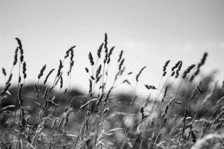 Grass - monochrome, grass, blackandwhite - ajhayward | ello