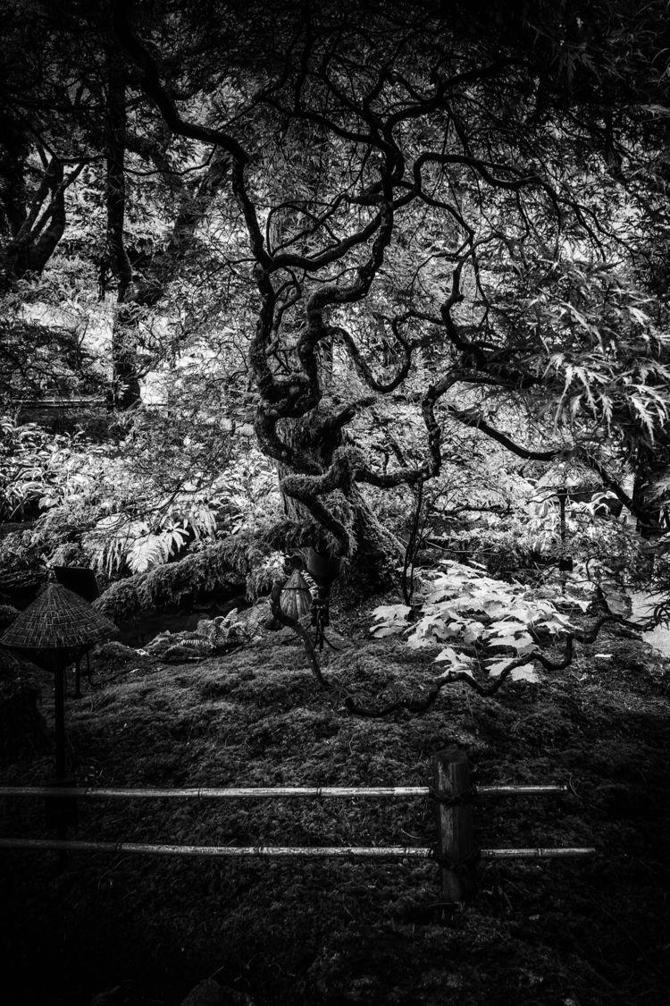 Portrait Twisty Tree - photography - johnnyg_photography | ello