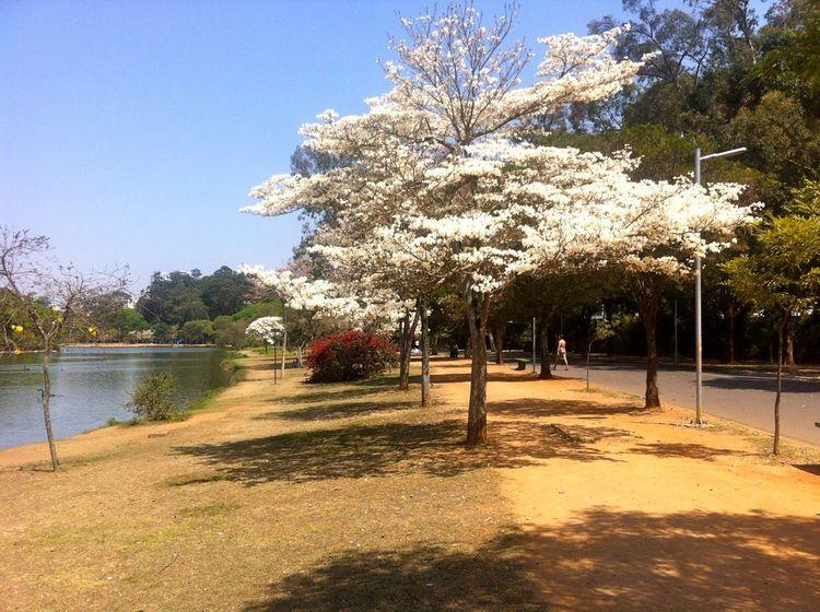 Mais uma foto Parque Ibirapuera - antoniomg | ello