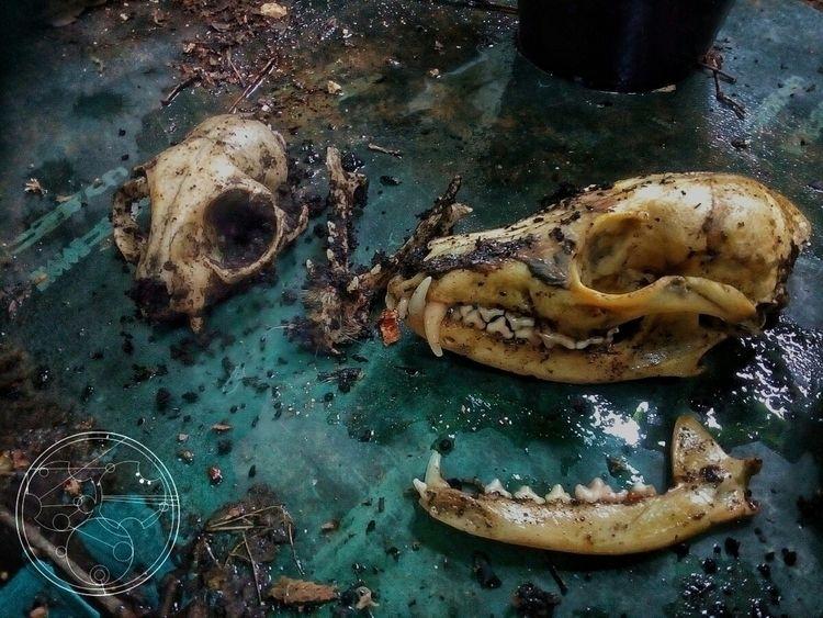 skull, structure, bone, unburied - juntavirus | ello