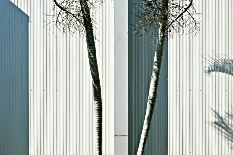 | . 2016 - steffentuck, palms, foliage - steffentuck | ello