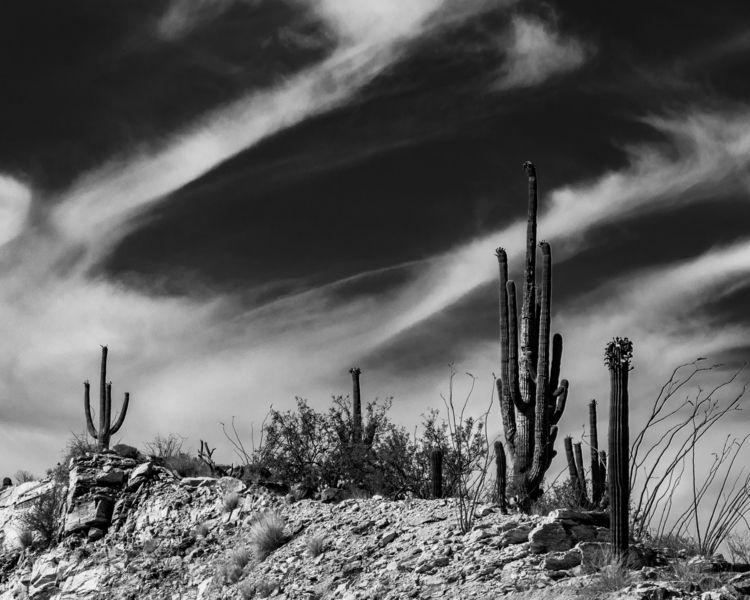 Desert Dream - smcarr49 | ello