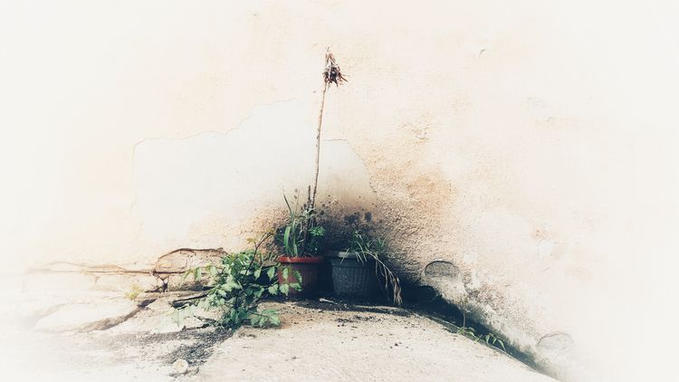 faded / mellow - art, photography - zoran_sajatovic | ello