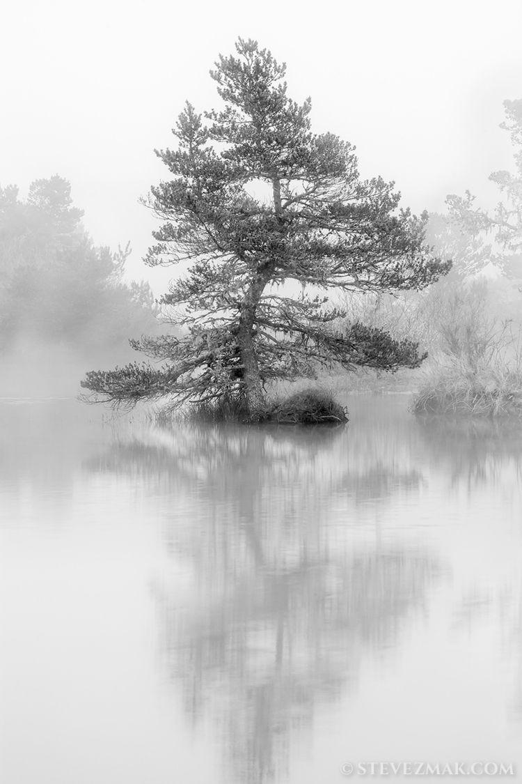 Twisted Tree -- love shooting s - stevezmak   ello