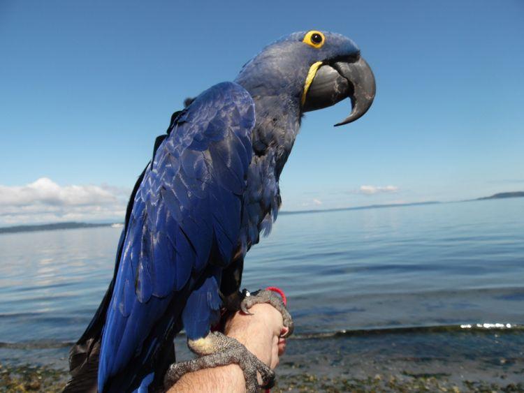 Portrait Parrot, Part Deux. Hya - michaelostrogorsky | ello