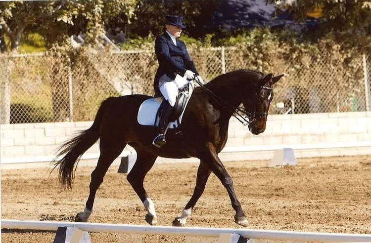 Shelley Browning owned horses m - shelleybrowningdressage | ello