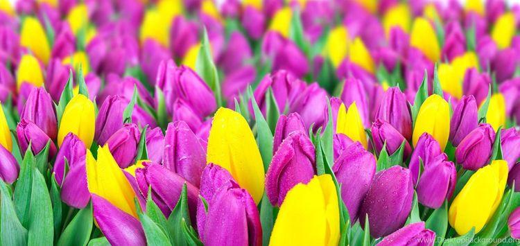Daily Tulip – News World Friday - robert-mcangus | ello