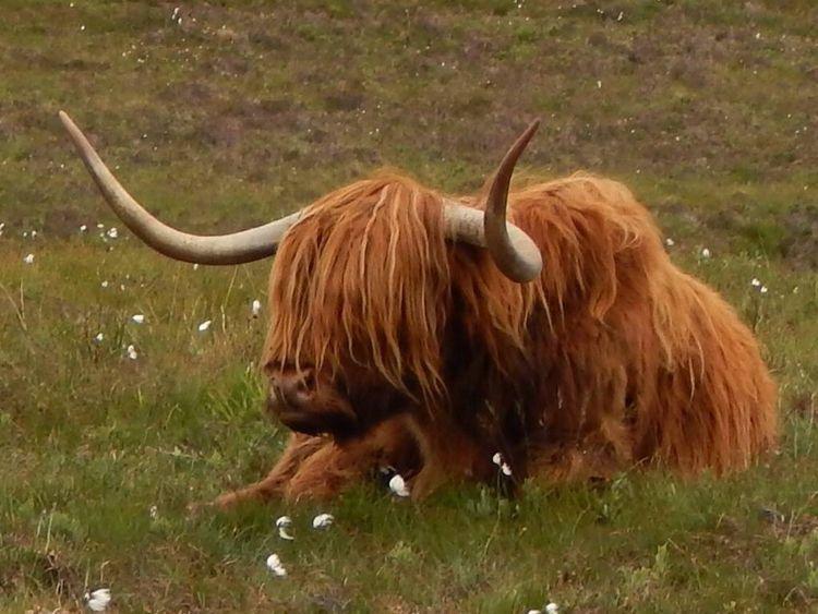 Isle Skye Scotland June 11 , 20 - susanoed | ello