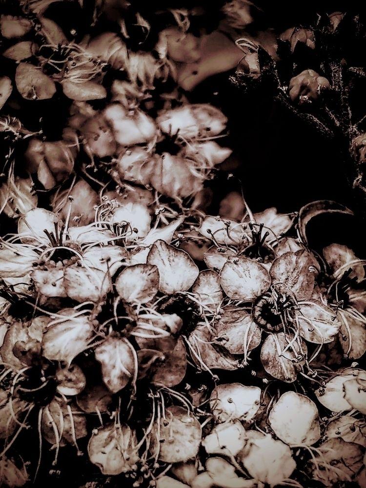 Strange Blooms, Blue Skys - photography - saysaphotography | ello