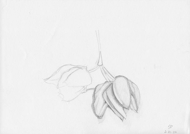 Sara Pereira, 2017/18 Desenho m - exploracaografica   ello