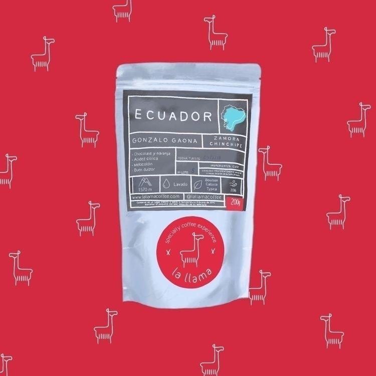 Coffee Week: La Llama Ecuador - juanjogasp | ello