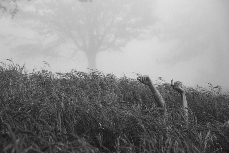 (IG) foggy Crestline forest - TBT - jsrphotos | ello