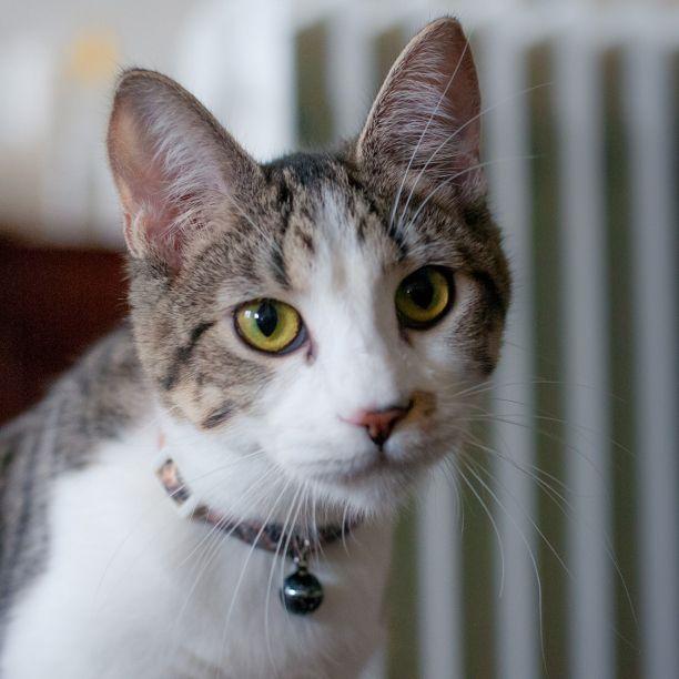 COMMENT SHARE Meet: Athena, Spa - snapcats | ello